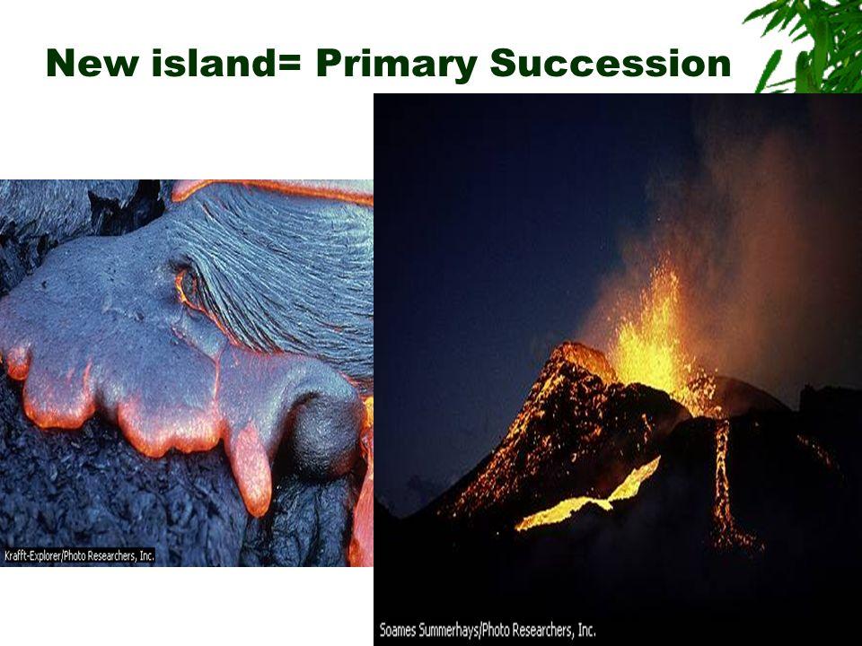 New island= Primary Succession