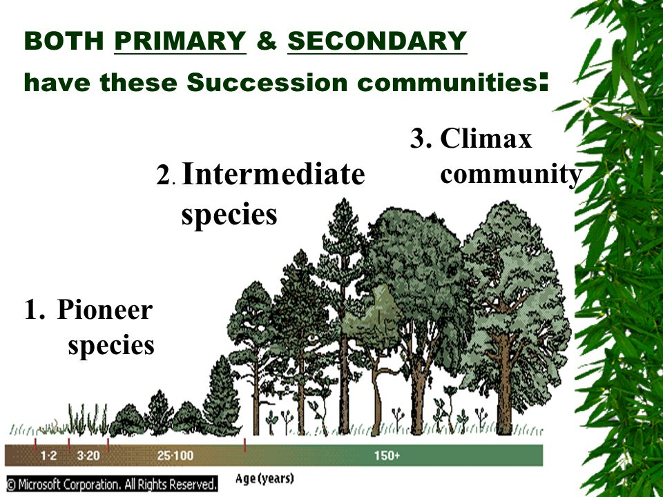 BOTH PRIMARY & SECONDARY have these Succession communities:
