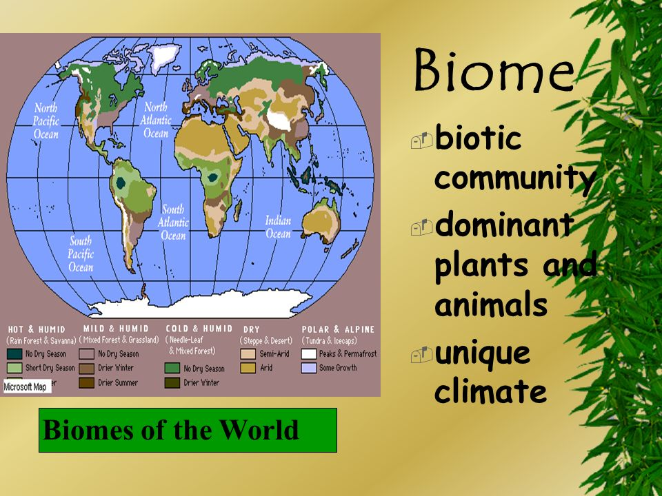 Biome biotic community dominant plants and animals unique climate