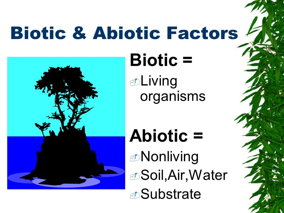 Biotic & Abiotic Factors