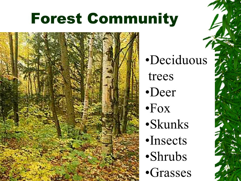 Forest Community ………….. Deciduous trees Deer Fox Skunks Insects Shrubs