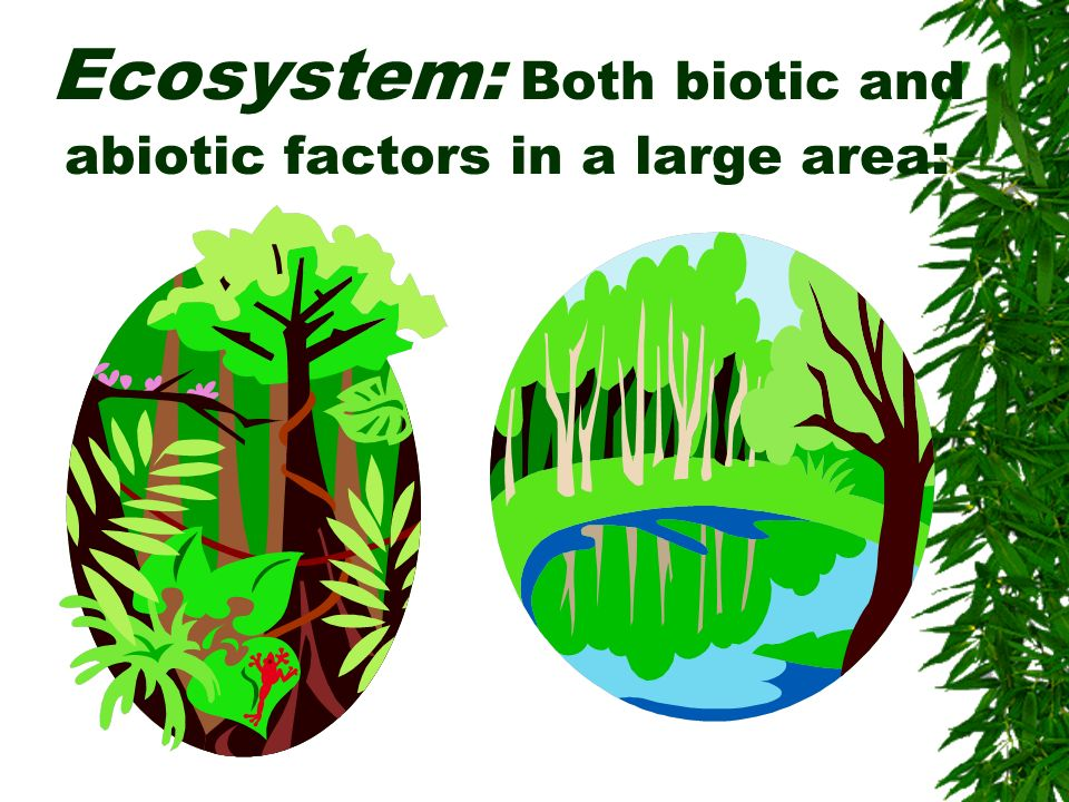 Ecosystem: Both biotic and abiotic factors in a large area: