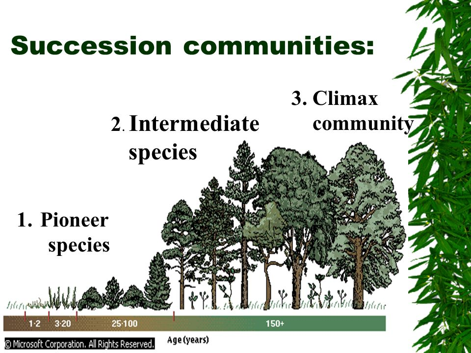 Succession communities:
