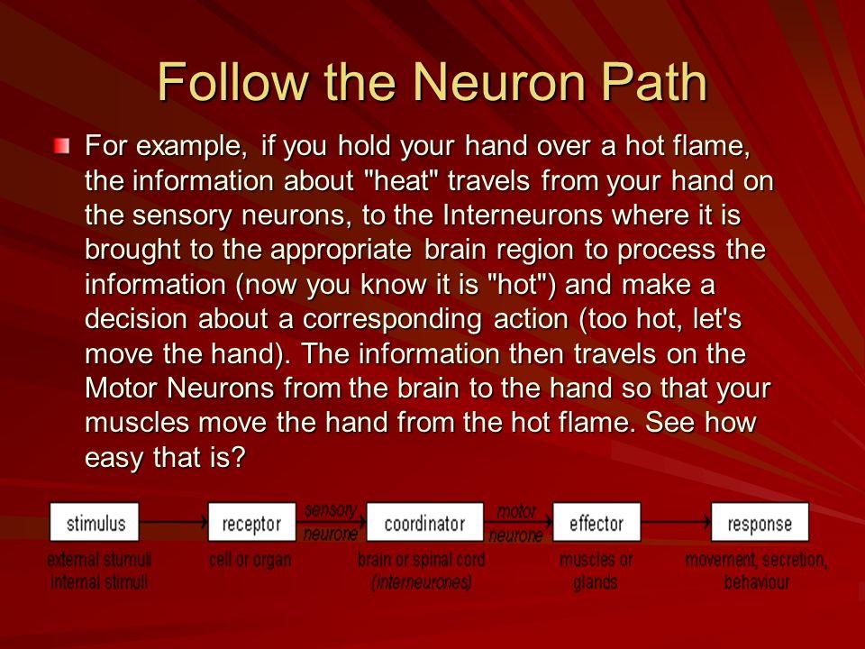 Follow the Neuron Path