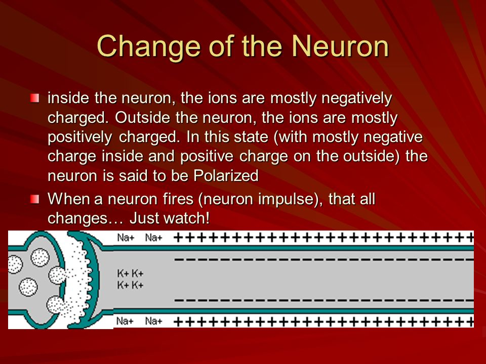 Change of the Neuron