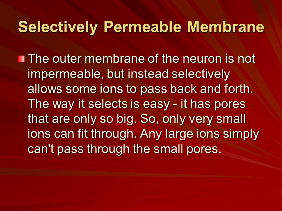 Selectively Permeable Membrane