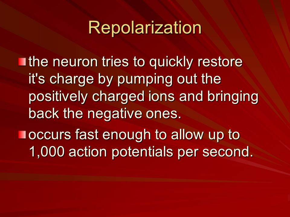 Repolarization the neuron tries to quickly restore it s charge by pumping out the positively charged ions and bringing back the negative ones.