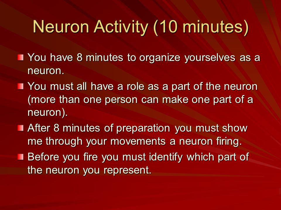 Neuron Activity (10 minutes)
