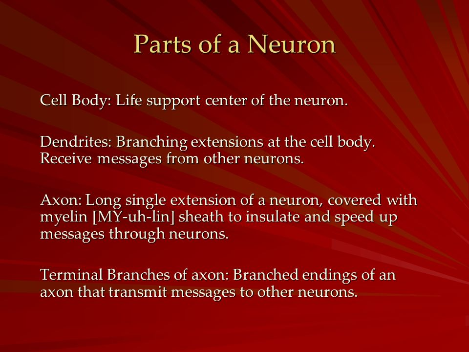 Parts of a Neuron Cell Body: Life support center of the neuron.