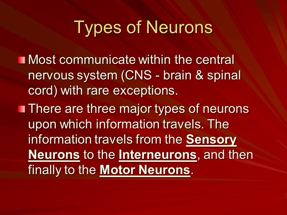Types of Neurons Most communicate within the central nervous system (CNS - brain & spinal cord) with rare exceptions.