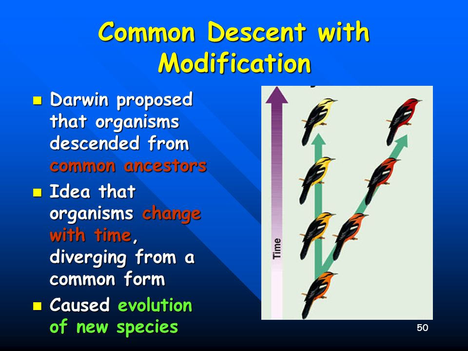 Common Descent with Modification