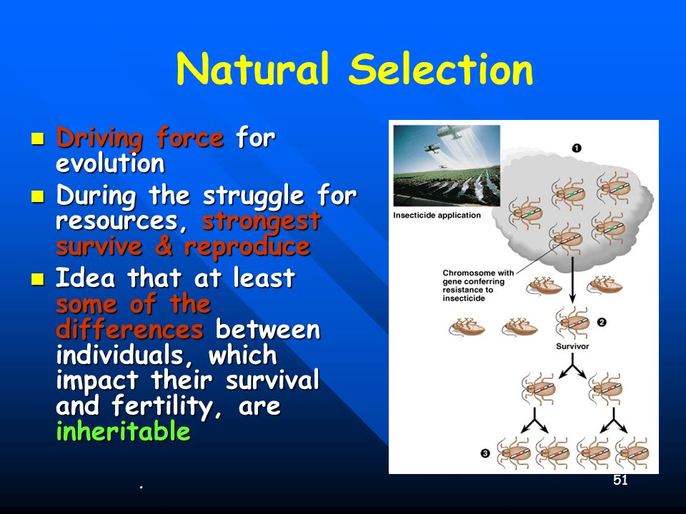 Natural Selection Driving force for evolution