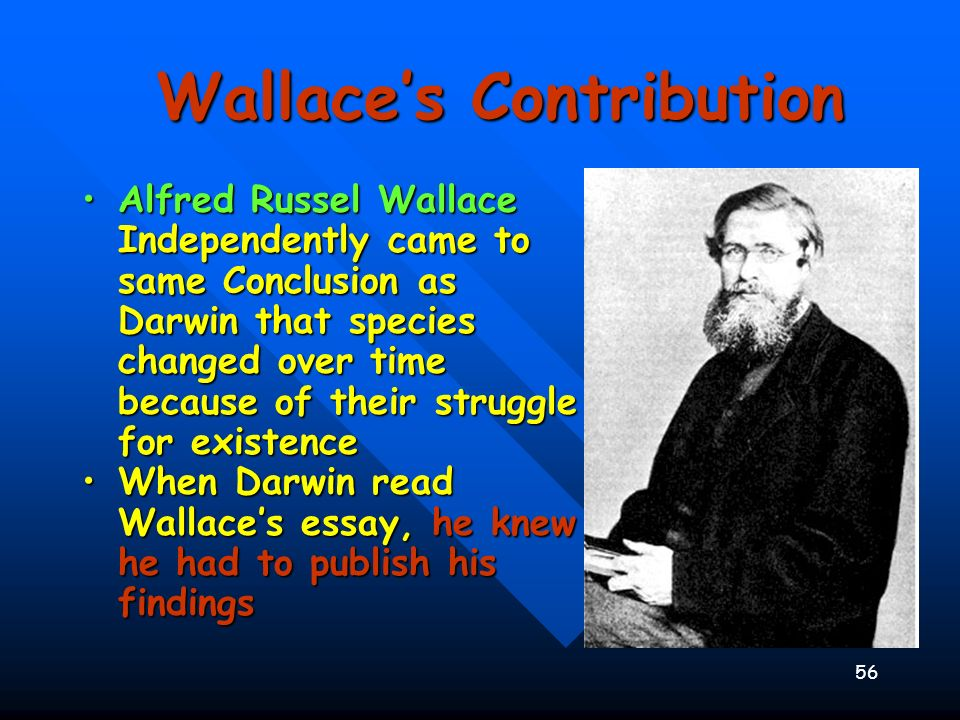 Wallace's Contribution