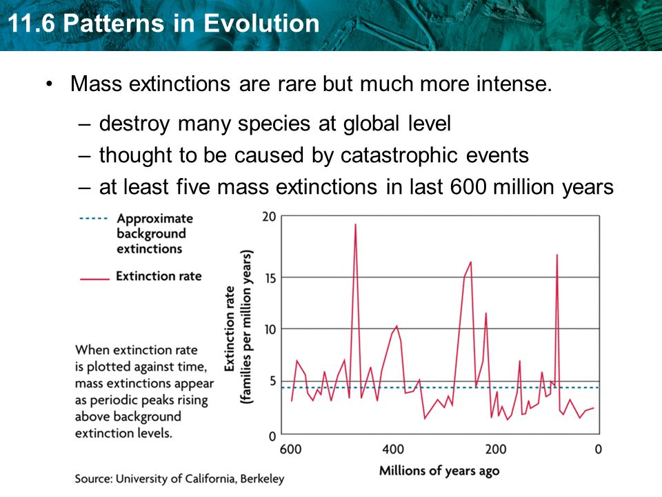 Mass extinctions are rare but much more intense.