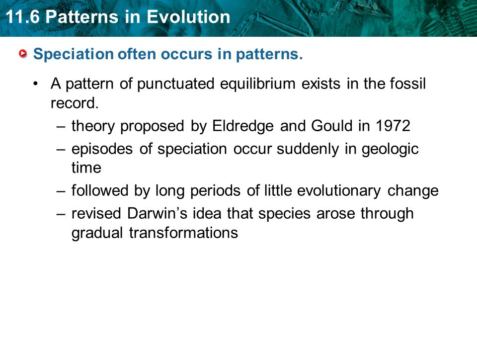 Speciation often occurs in patterns.