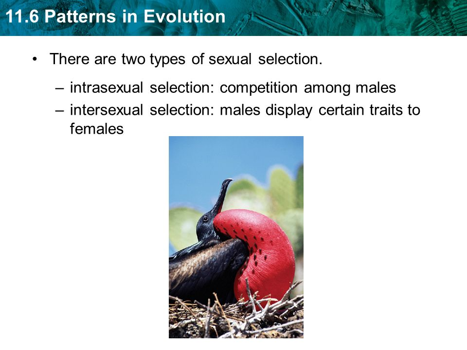 There are two types of sexual selection.