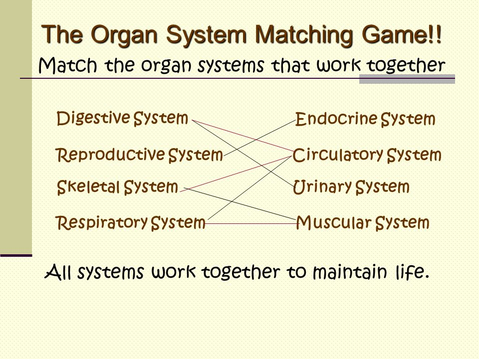 The Organ System Matching Game!!