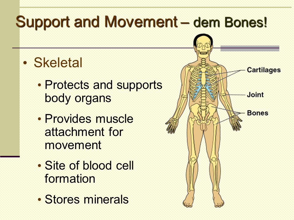 Support and Movement – dem Bones!