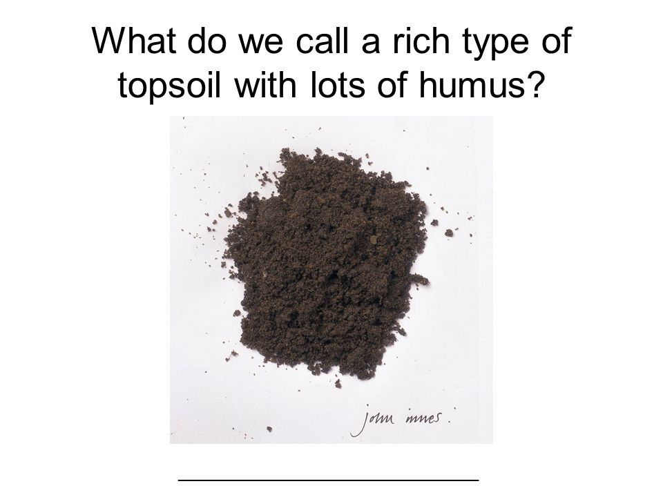 What do we call a rich type of topsoil with lots of humus