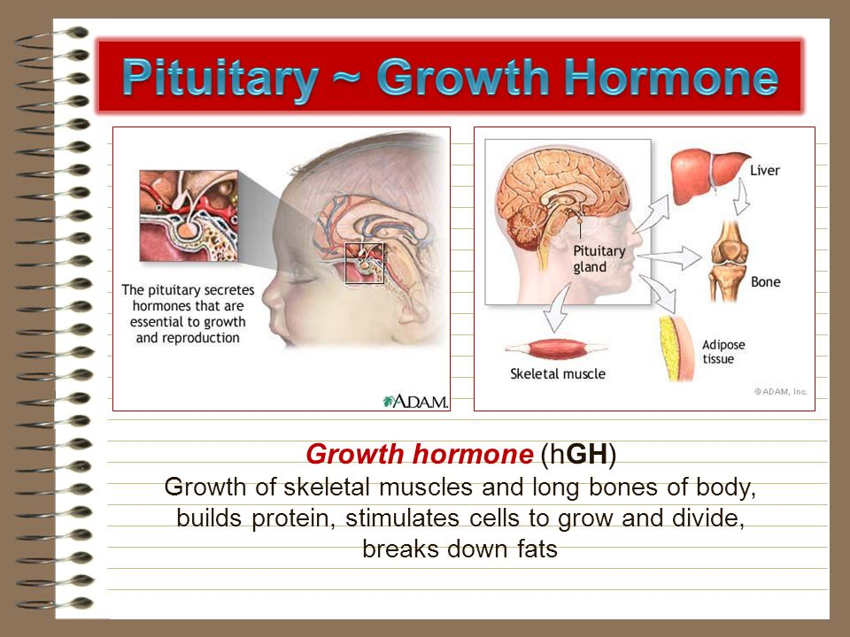 Pituitary ~ Growth Hormone