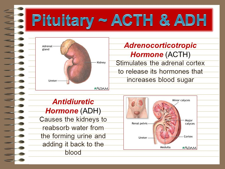 Pituitary ~ ACTH & ADH Adrenocorticotropic Hormone (ACTH)
