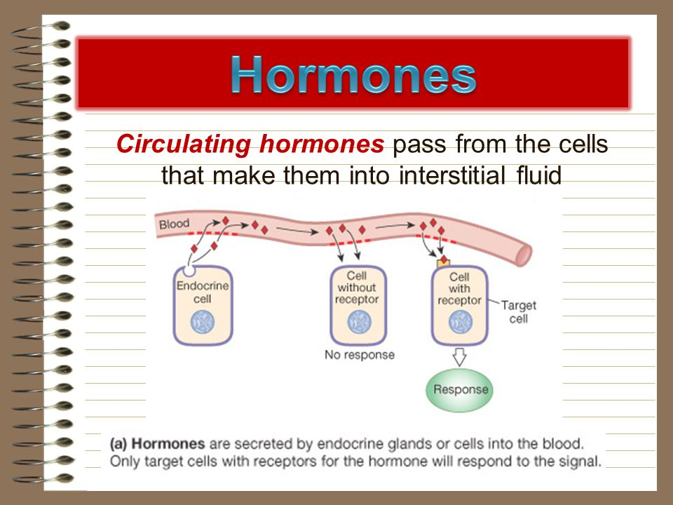 Hormones Circulating hormones pass from the cells that make them into interstitial fluid. Circulating hormones only affect the target cells.