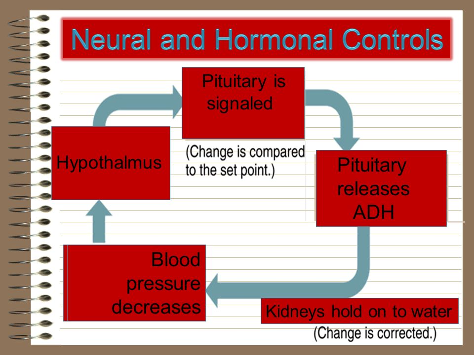 Neural and Hormonal Controls
