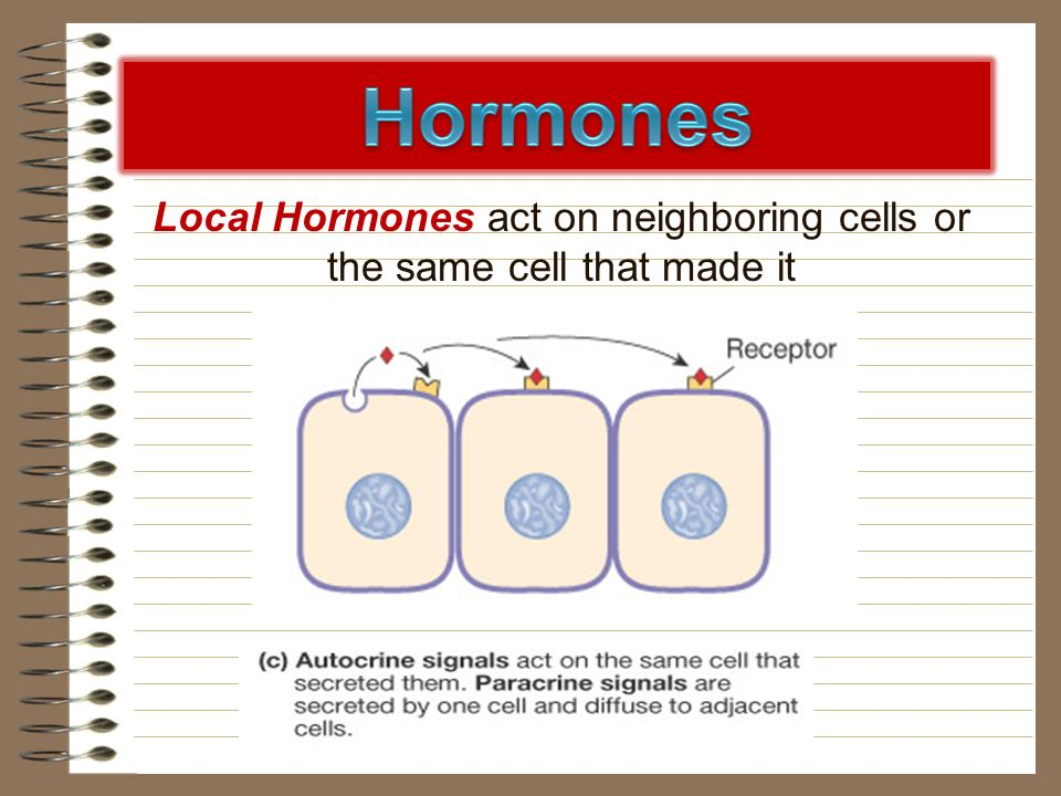 Local Hormones act on neighboring cells or the same cell that made it