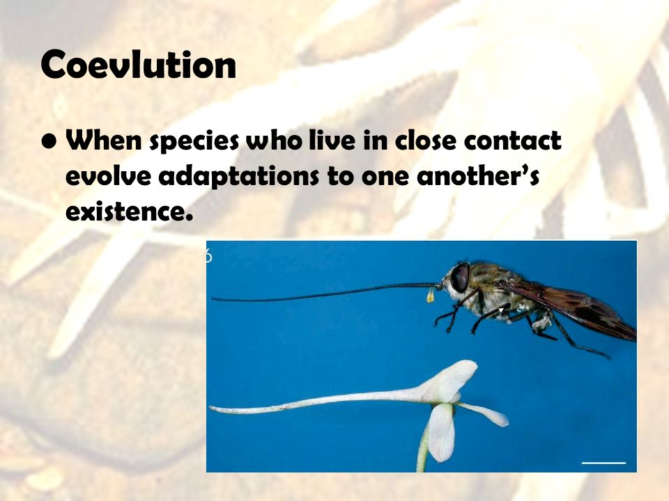 Coevlution When species who live in close contact evolve adaptations to one another's existence.