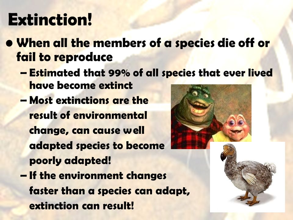 Extinction! When all the members of a species die off or fail to reproduce. Estimated that 99% of all species that ever lived have become extinct.