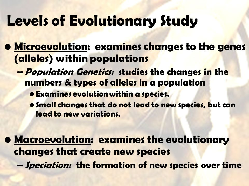 Levels of Evolutionary Study