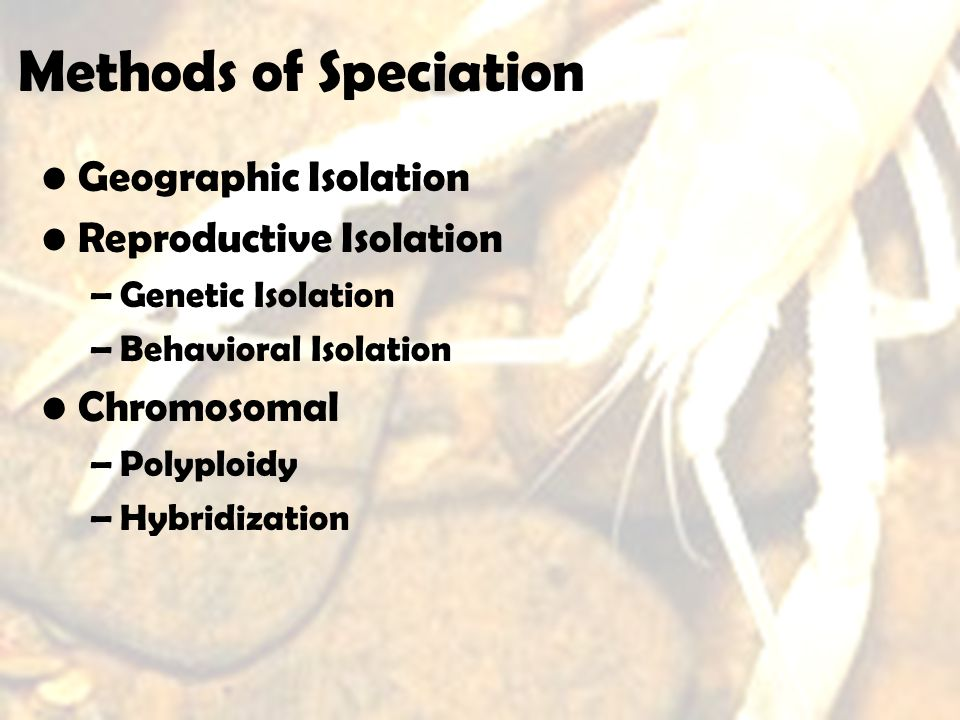 Methods of Speciation Geographic Isolation Reproductive Isolation
