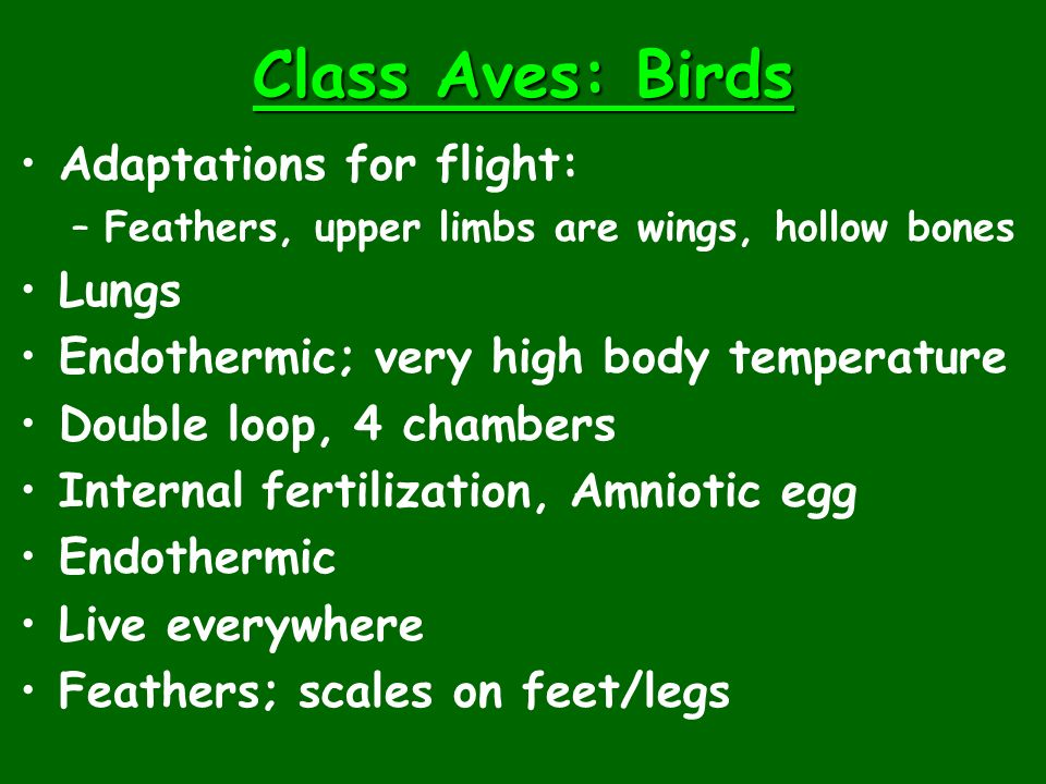 Class Aves: Birds Adaptations for flight: Lungs
