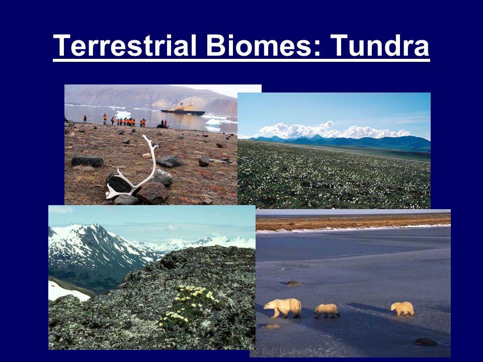 Terrestrial Biomes: Tundra