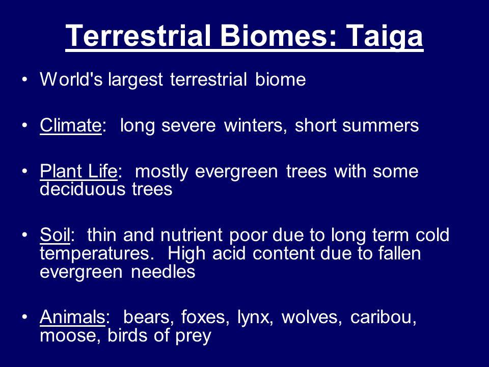 Terrestrial Biomes: Taiga