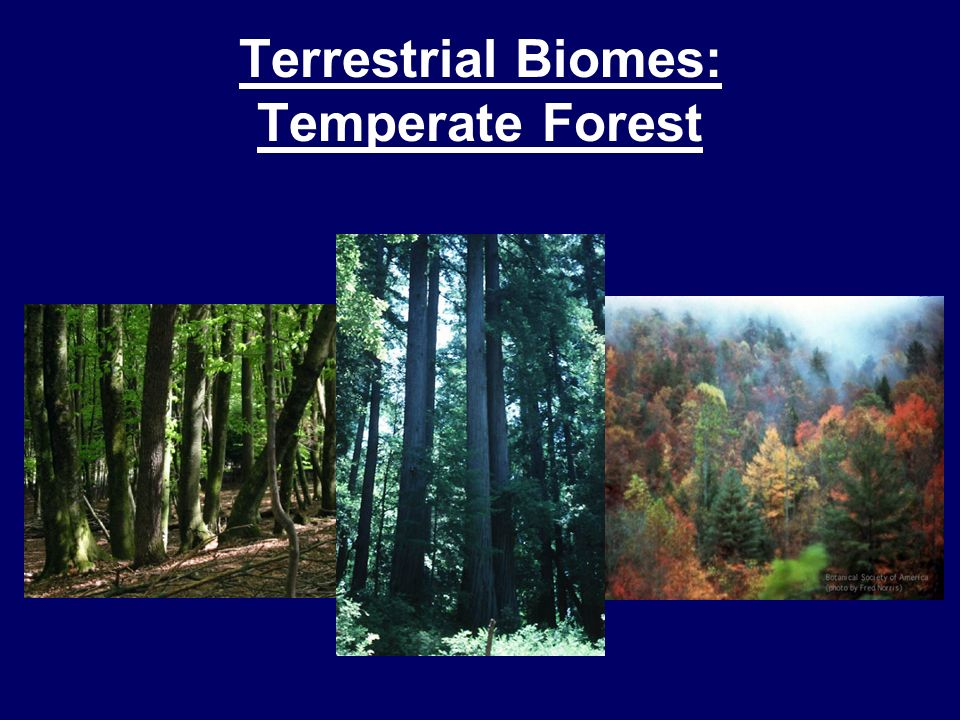 Terrestrial Biomes: Temperate Forest