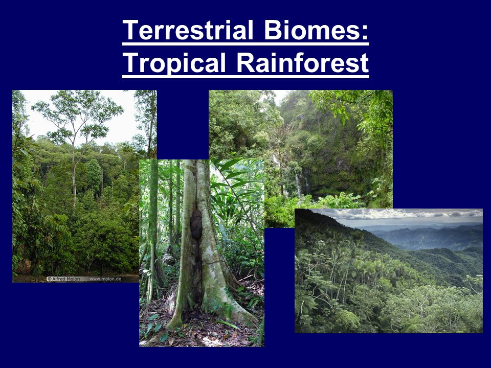 Terrestrial Biomes: Tropical Rainforest