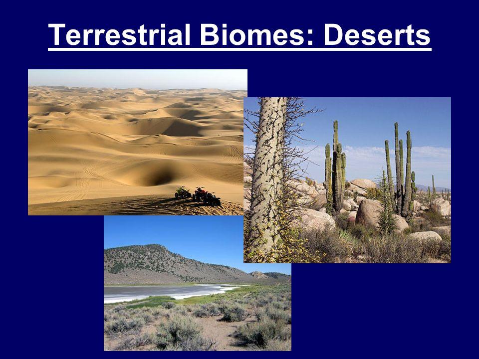 Terrestrial Biomes: Deserts