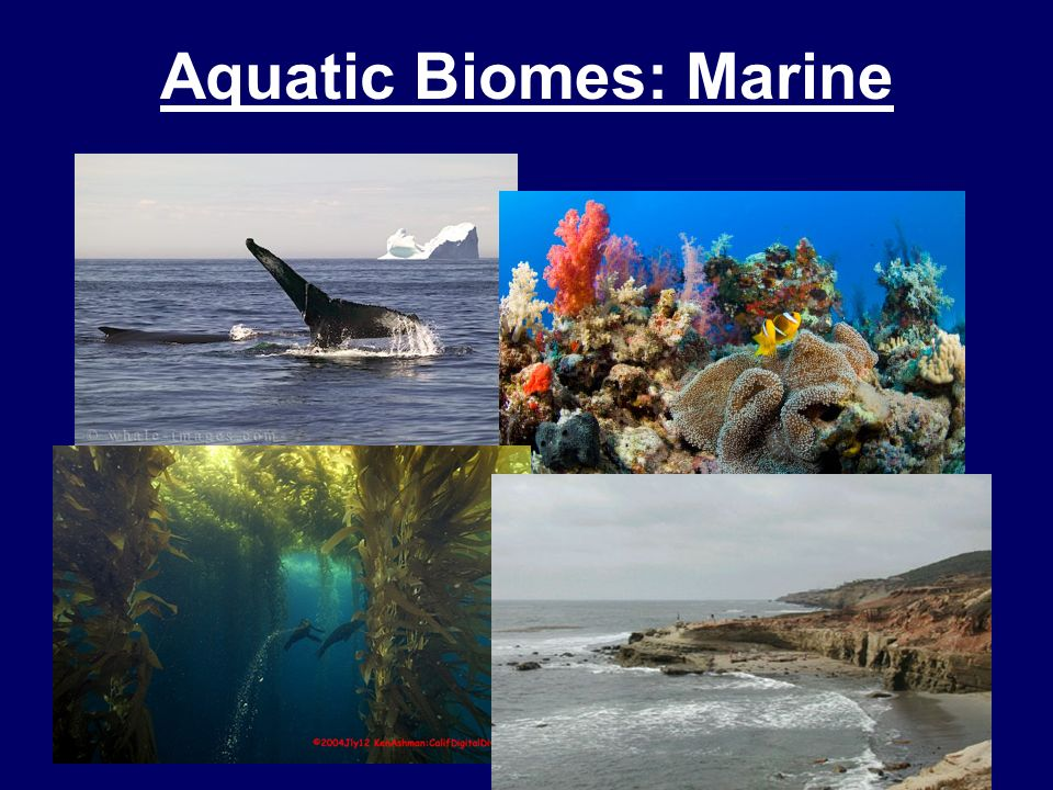 ocean biomes There are tons of animals found in the ocean it varies between many different species listed are some of the millions that live in the ocean:.