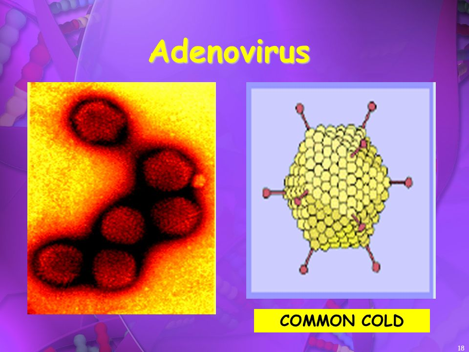 Adenovirus COMMON COLD