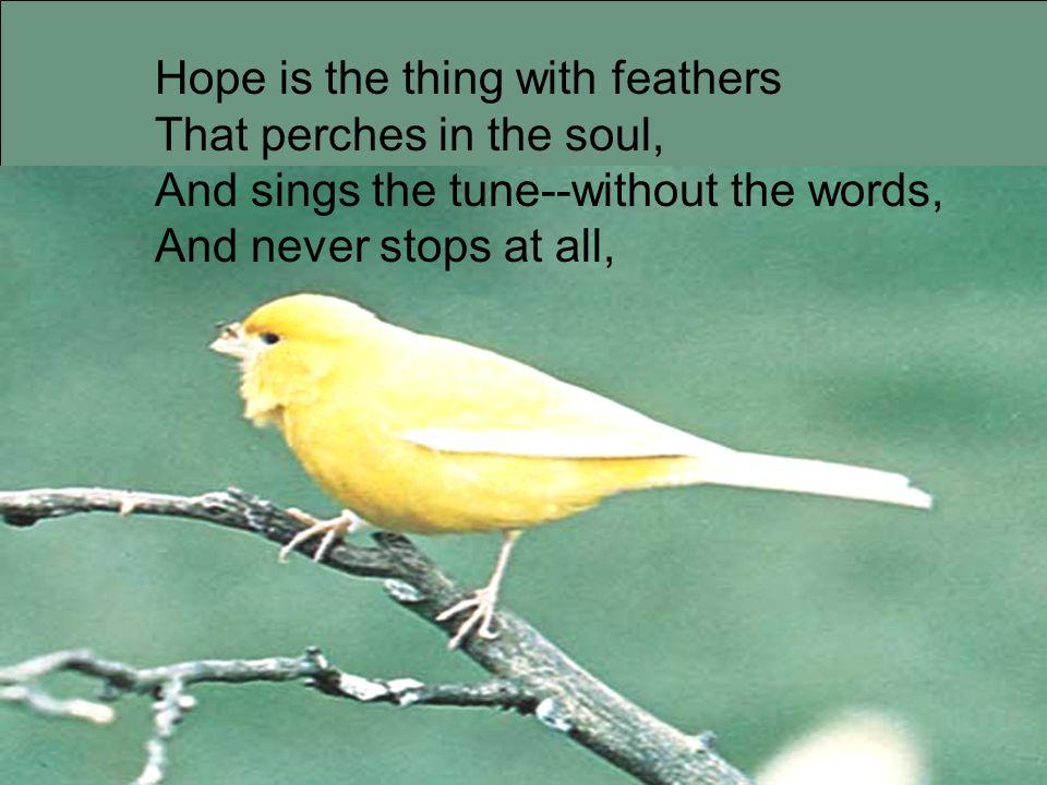 Hope is the thing with feathers That perches in the soul, And sings the tune--without the words, And never stops at all,