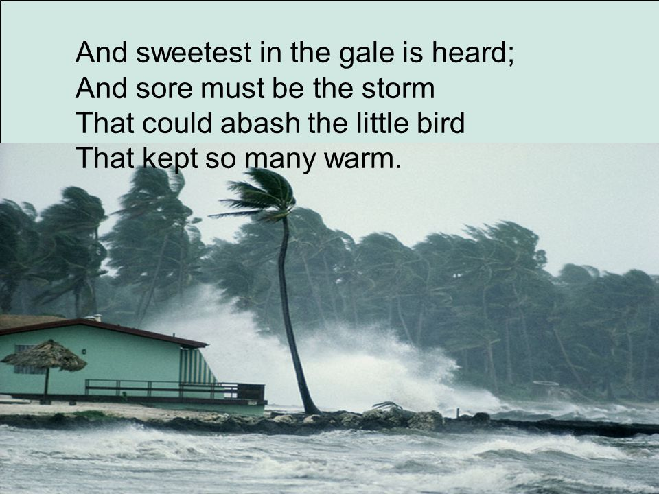 And sweetest in the gale is heard; And sore must be the storm That could abash the little bird That kept so many warm.