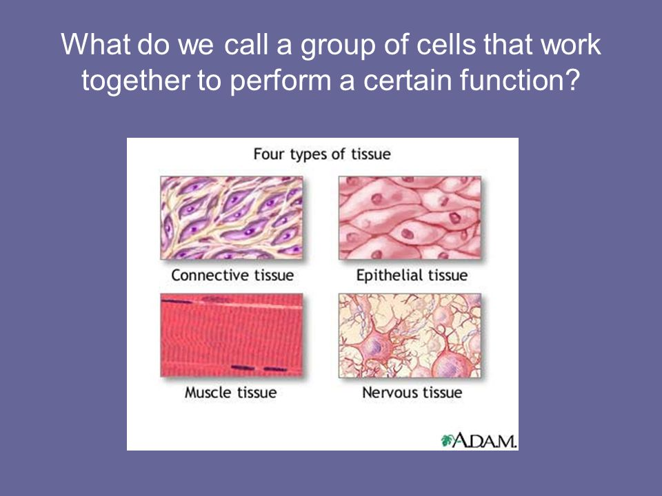 What do we call a group of cells that work together to perform a certain function