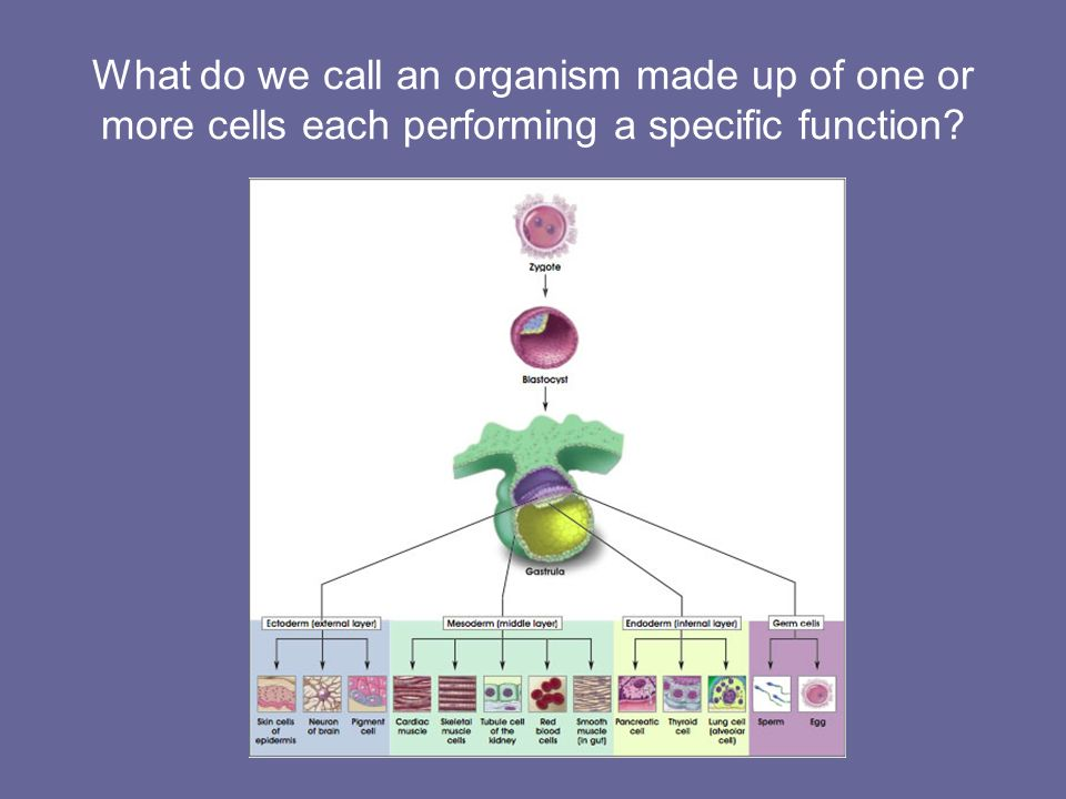 What do we call an organism made up of one or more cells each performing a specific function