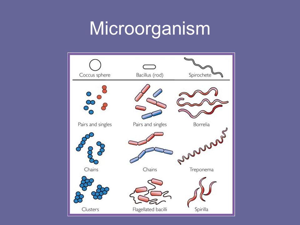 Microorganism