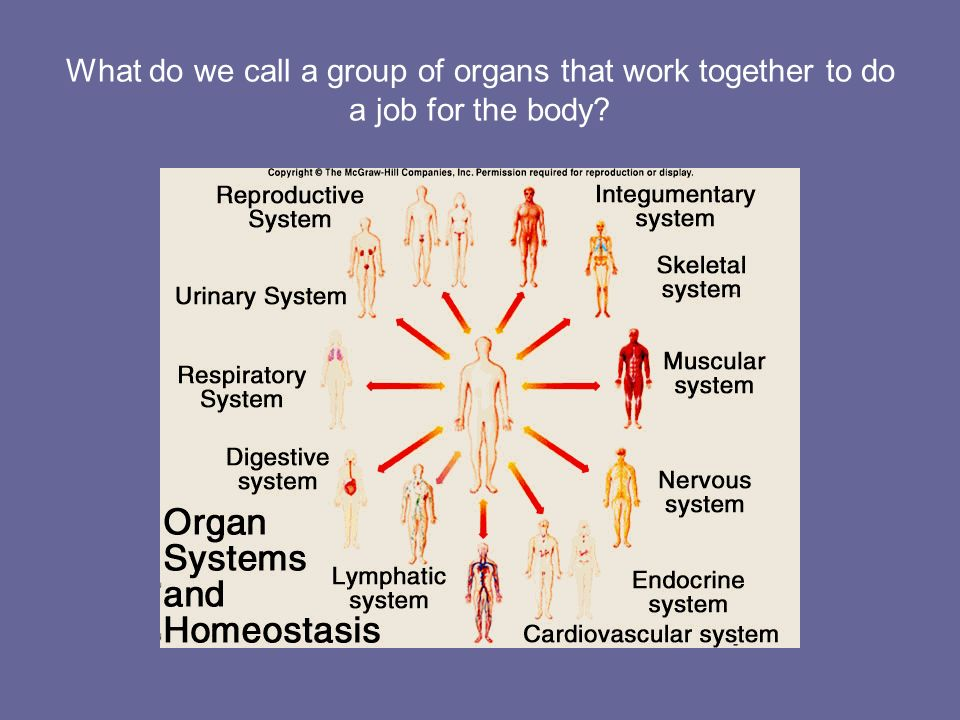 What do we call a group of organs that work together to do a job for the body