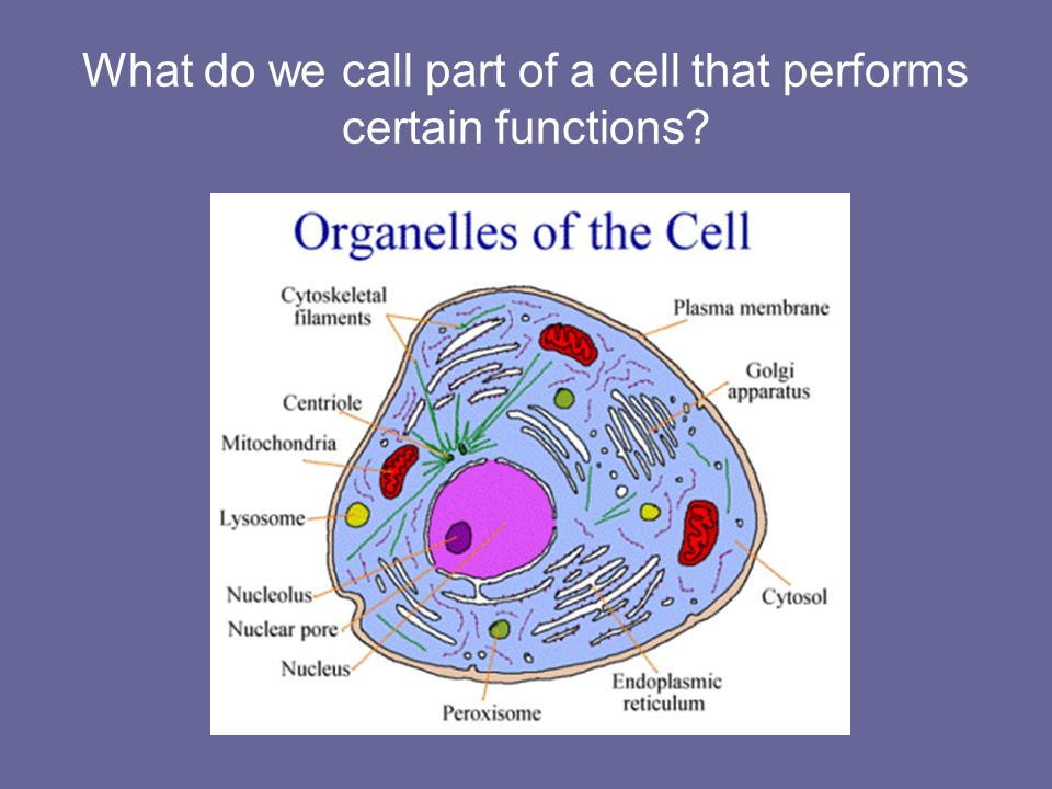 What do we call part of a cell that performs certain functions