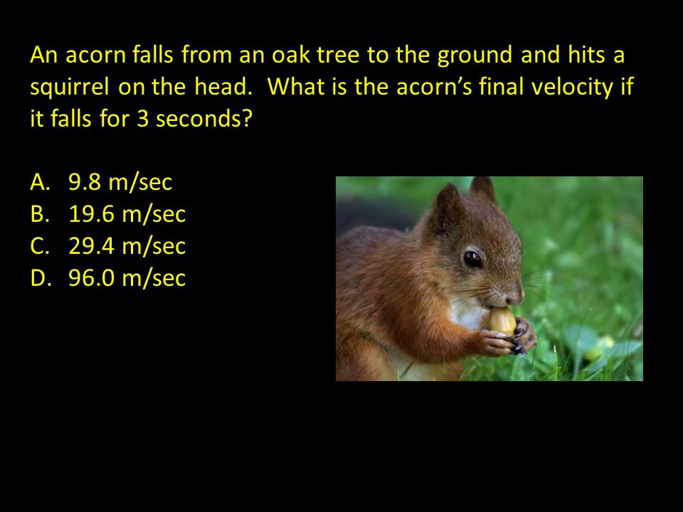 An acorn falls from an oak tree to the ground and hits a squirrel on the head. What is the acorn's final velocity if it falls for 3 seconds