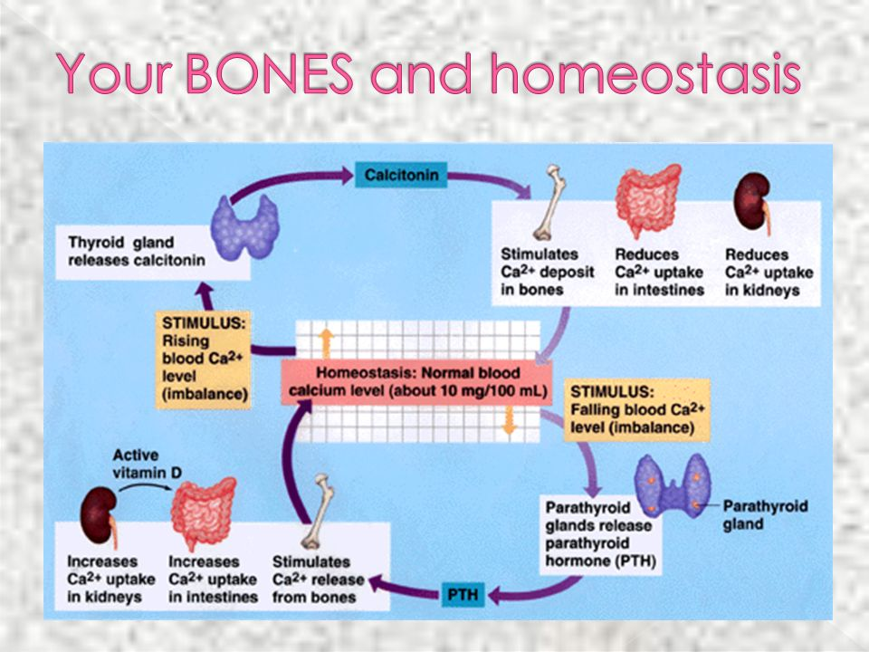 Your BONES and homeostasis
