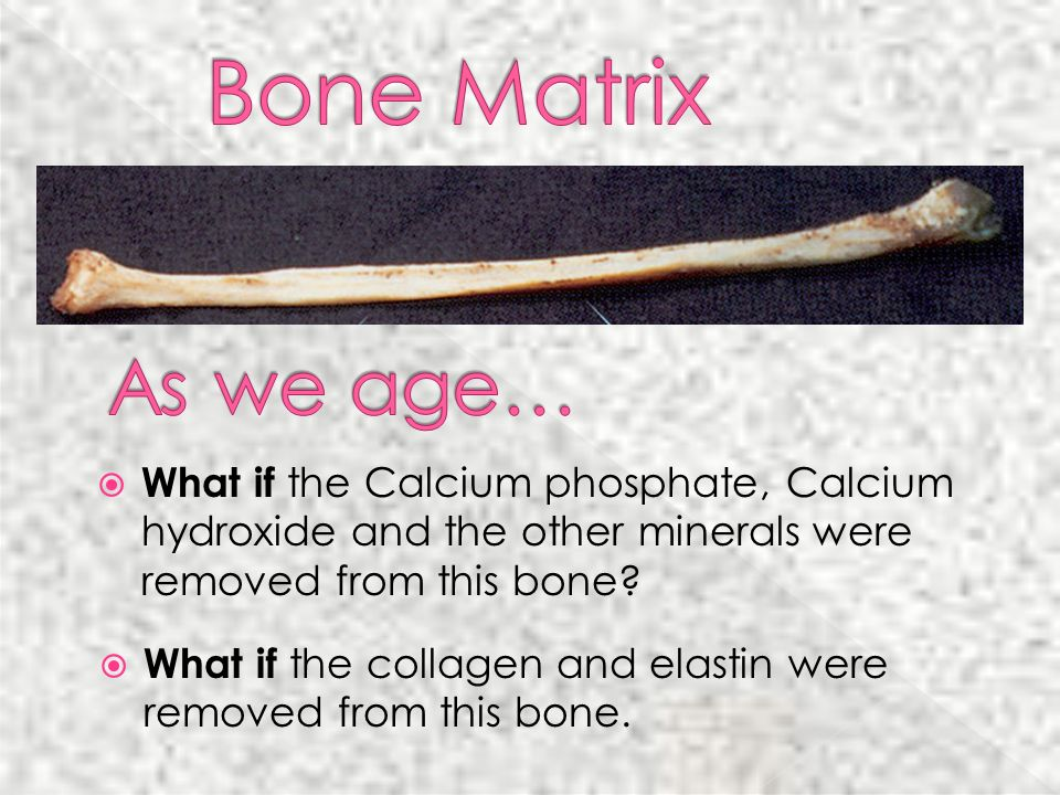 Bone Matrix As we age… What if the Calcium phosphate, Calcium hydroxide and the other minerals were removed from this bone